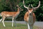 1263583080_deer42_1600x1200