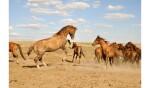 элиста кони