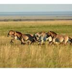 оренбург кони